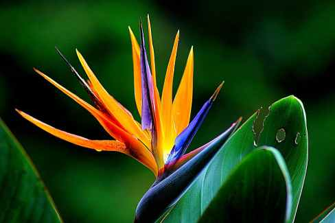 flower-wildflower-bird-of-paradise-floral-66243.jpeg